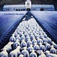 FEMA SHEEP