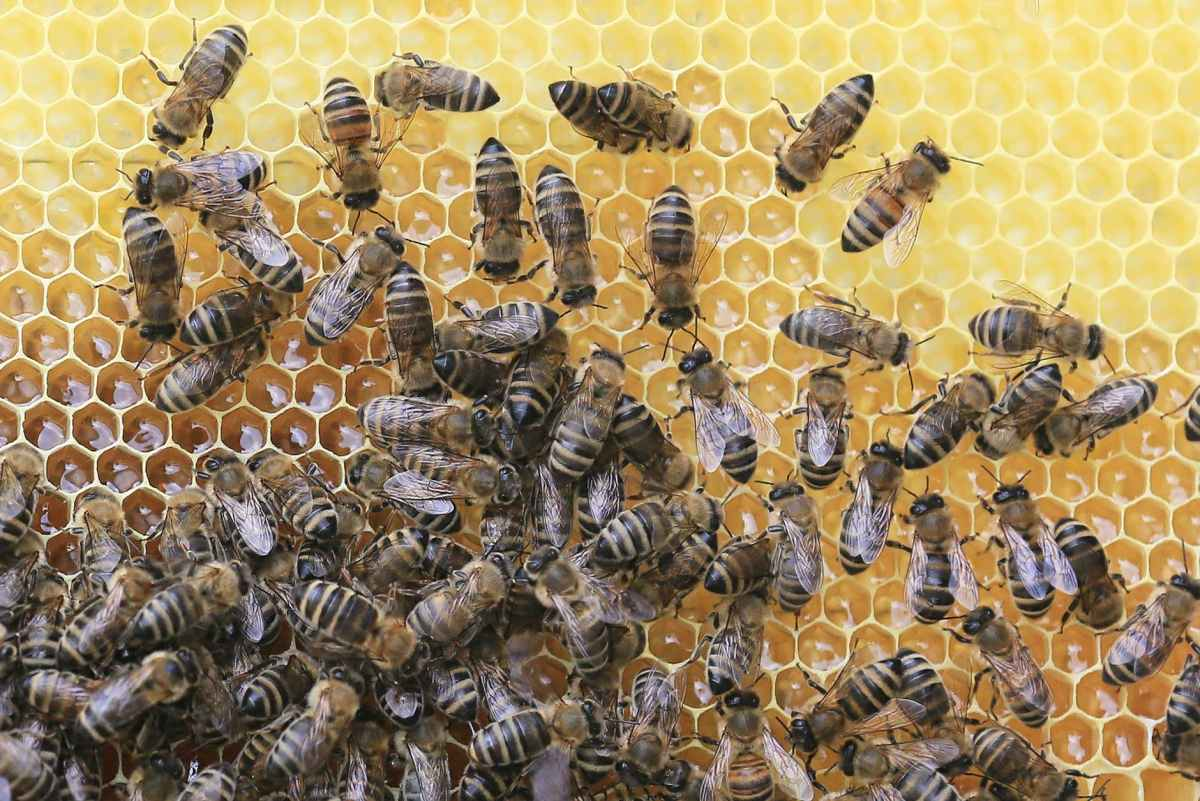 animal world apiary beehive bees