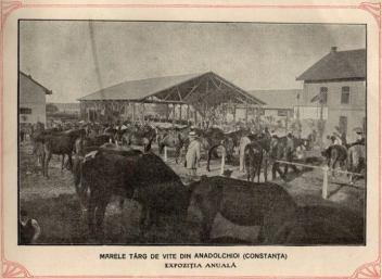 Marele târg de vite din Anadolchioi (Constanța ) - Expoziția anuală