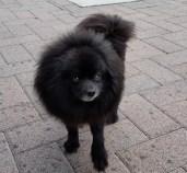 dog-buddy-2