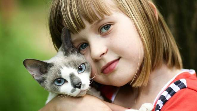 Cat being cuddled by a kid. They are still loved by human despite non mention in the Bible   Photo credit: Animalist