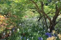 In the Botantic Gardens