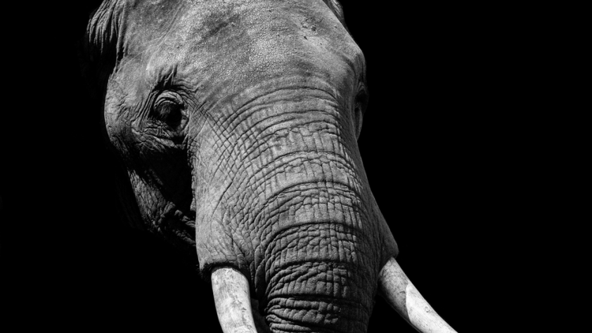 A picture of an elephants head