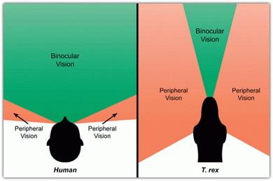 Hogyan lehet oldalsó látást kialakítani? - Szemüveg May