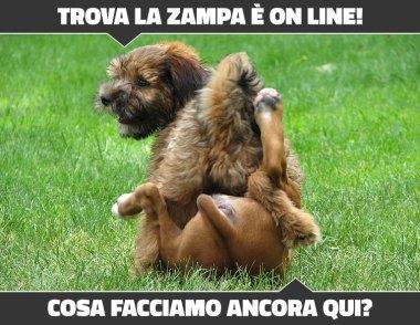 trova-la-zampa-startup-per-cani-e-gatti
