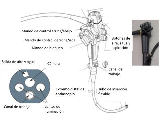Endoscopio