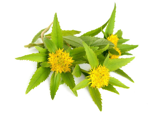 Ingredients Of PhenGold-Rhodiola SP