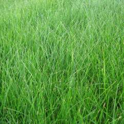 Lawn Chair With Shade Ak Racer Gaming Fescue's And Fes-don'ts: Some Helpful Tips | Hedgerow Homeowners Association