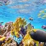 Australia destina 48 millones a proteger la Gran Barrera de Arrecifes