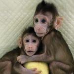 Logran científicos chinos la primera clonación de primates