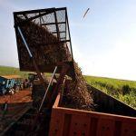 Cuba produce 4.200 toneladas de azúcar orgánico, el 60 % del plan previsto