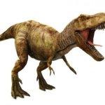 Las aves dan claves de la locomoción de dinosuarios como Tirannosaurus rex