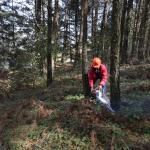 Persiste tala inmoderada de bosques