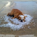 Ondas de calor: riesgos, daños y efectos para la población