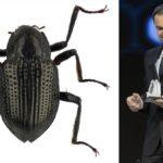 Leonardo DiCaprio, después del Óscar, ahora un escarabajo con su nombre