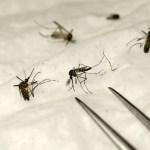 Los últimos avances en la lucha contra la malaria centran la cumbre de Dakar