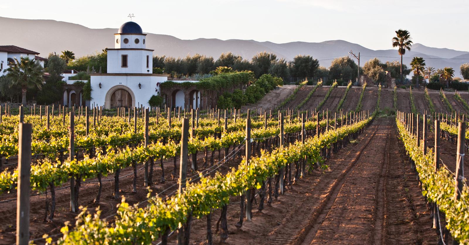 Valle de Guadalupe es reconocido por una zona vinícola de tradición.