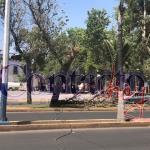 Vientos derriban gruesa rama y ésta tumba línea eléctrica en Dolores del Río; Semáforos fuera de servicio en el centro y fraccionamientos sin electricidad