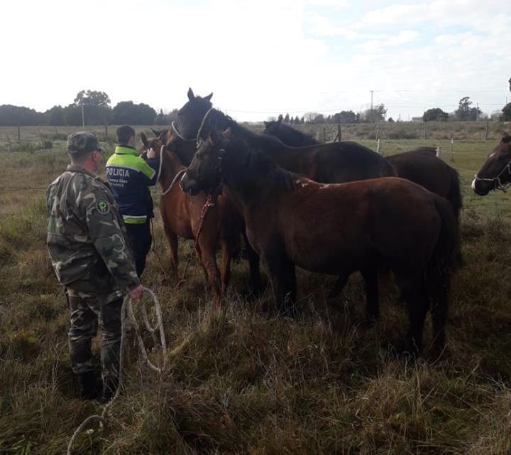 Secuestraron 11 caballos que se encontraban sueltos en el Paraje Pavón