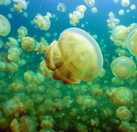 【2020帛琉趣遊】~環礁潛點,大斷層,牛奶湖,水母湖4天 | 康得旅行社