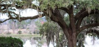 Middleton Place & Magnolia Plantation Tour