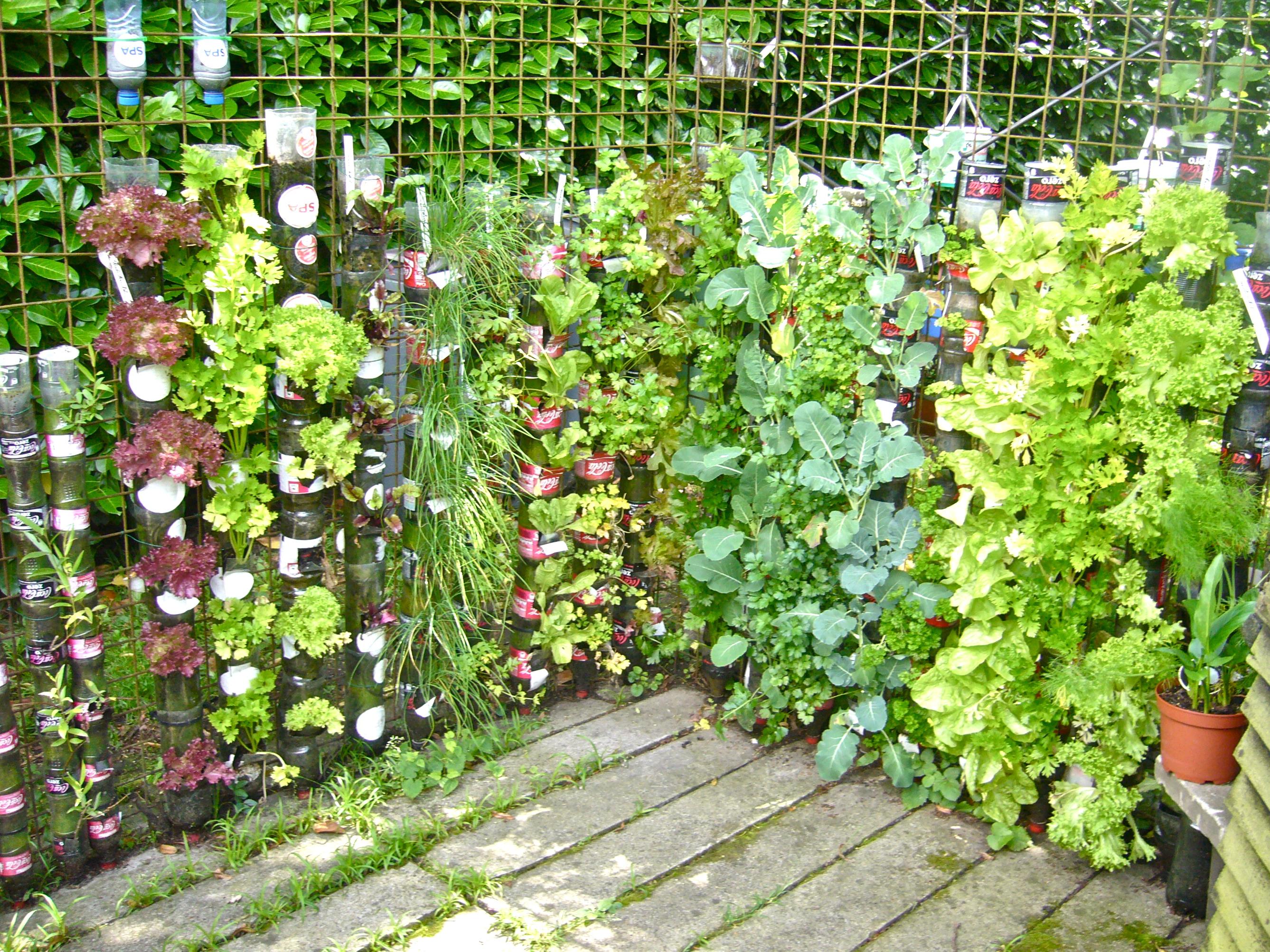 Bottle Gardens  Container Gardening