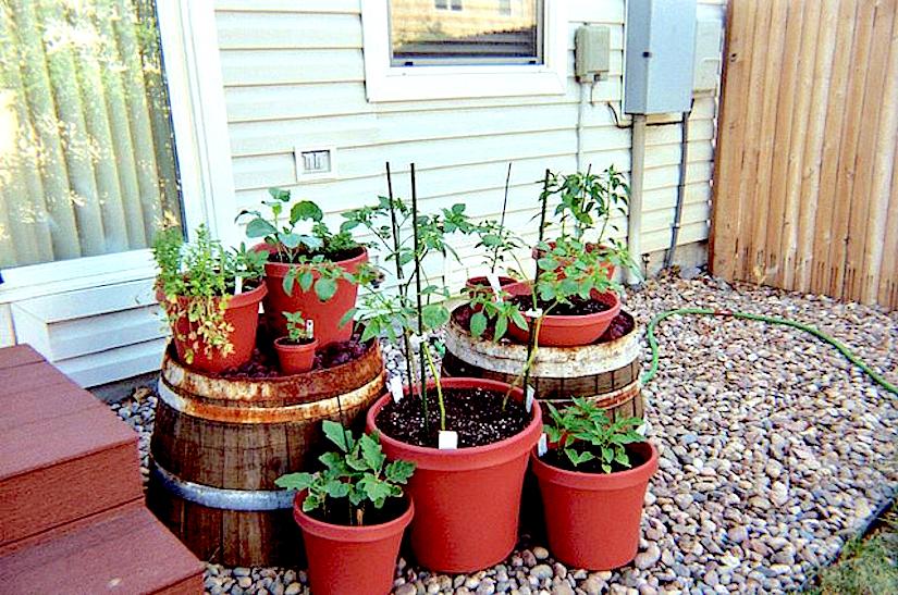 Urban Gardening – CONTAINER GARDENING