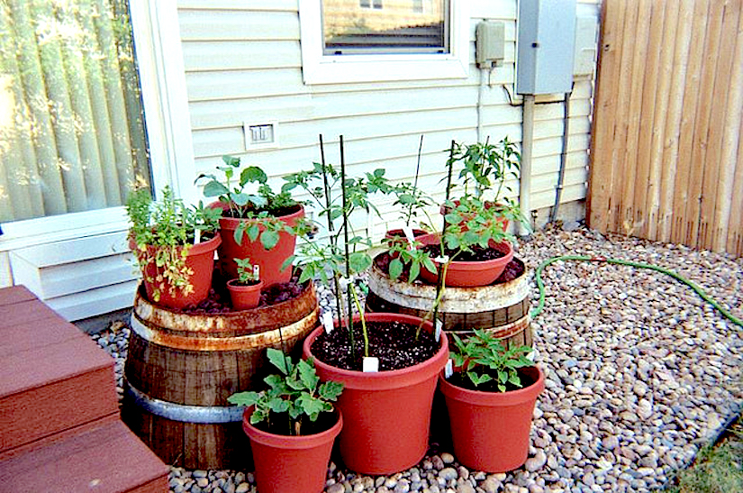 Yes, We Can Be An Urban Gardener !