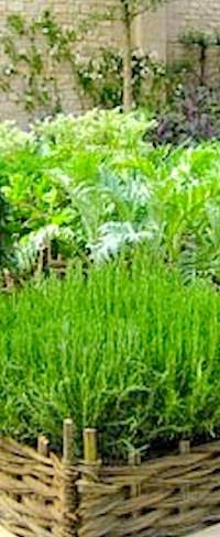 herb gardening  CONTAINER GARDENING