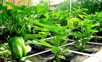 How can I grow vegetables on my terrace ?  CONTAINER