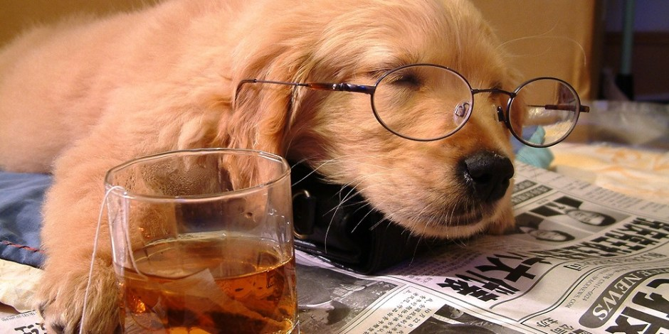Cachorro cansado, dormindo sobre um jornal. Ele usa óculos e tem a pata apoiada sobre um copo de chá. Ele parece estar cansado após um dia de trabalho.