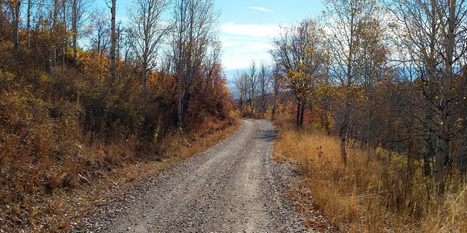 Uma estrada de terra vazia, em meio a vegetação