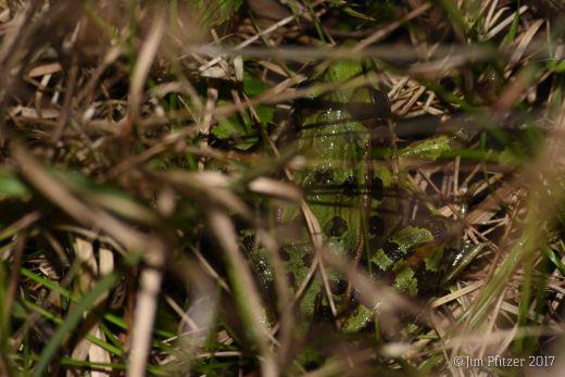 Around the Pond-9.jpg