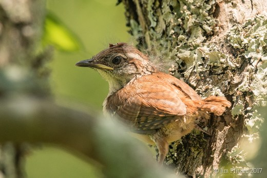 Garden Shed Nest-2