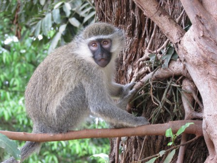 Monkey at Botanical Gardens