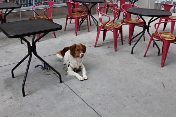 dog visits bookstore-2