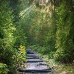 Meditation as a Pathway to Awaken to Love
