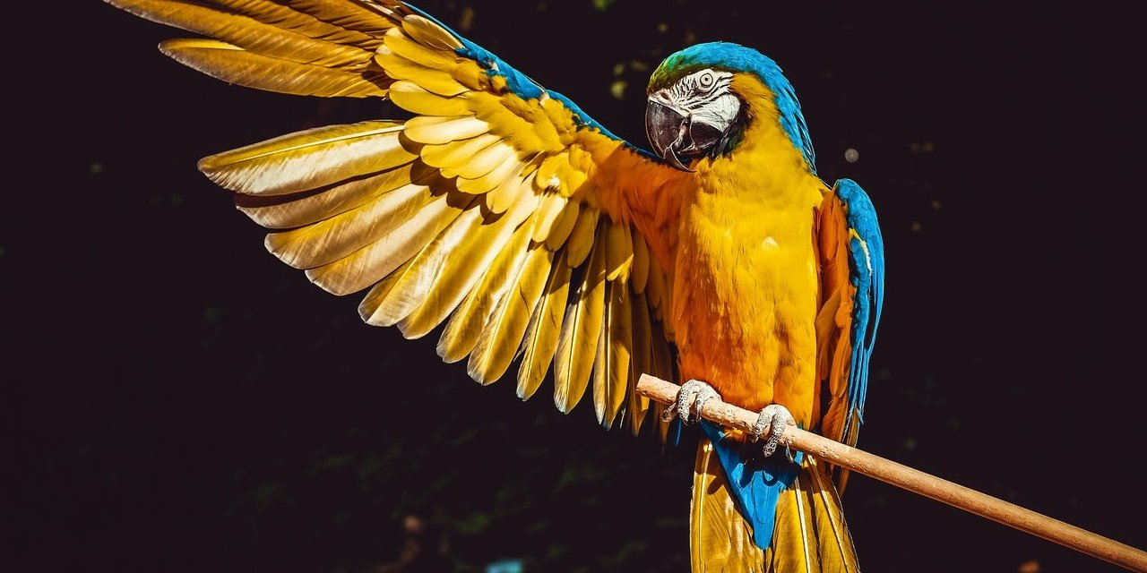 The Same Bird