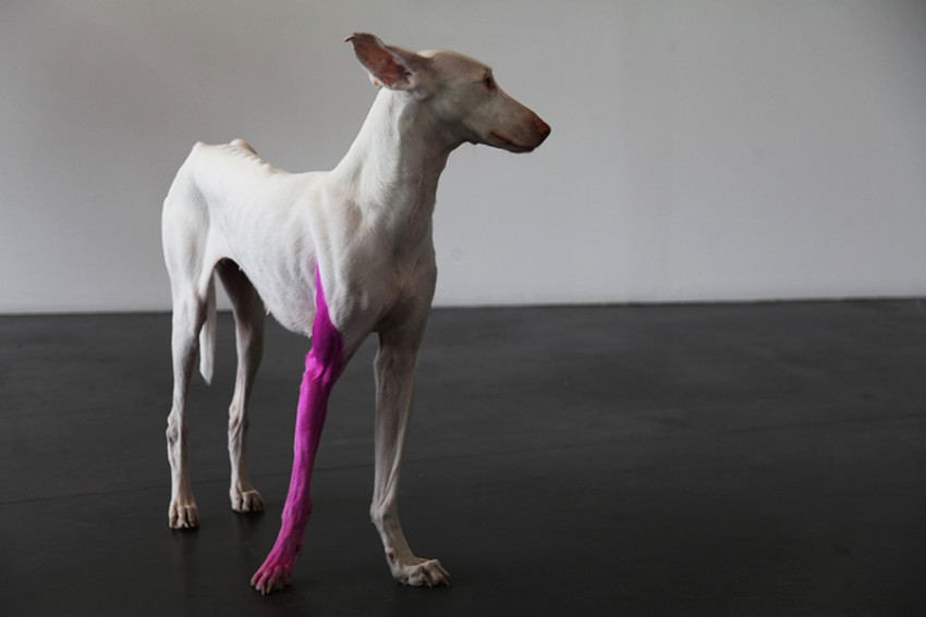 Pierre Huyghe's dog Human. Photo: Drew Tewksbury.
