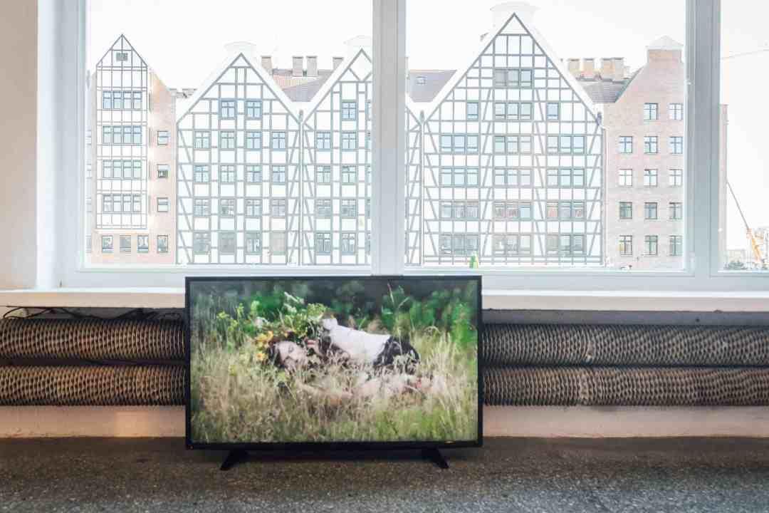 Movements of Plants, 2013, Agnieszka Brzeżańska, The National Park All Over The Earth, photo: Piotr Żagiell
