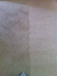 Fire Dawgs Carpet Cleaning | Indianapolis, IN 46222 ...