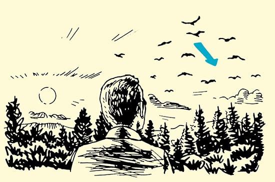 man watching bird flight path in forest illustration