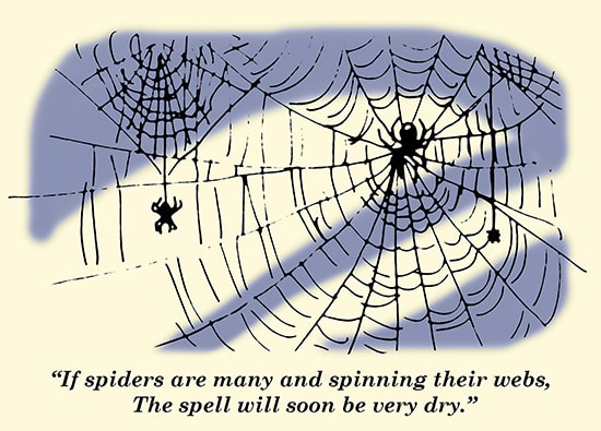 Spiders 1