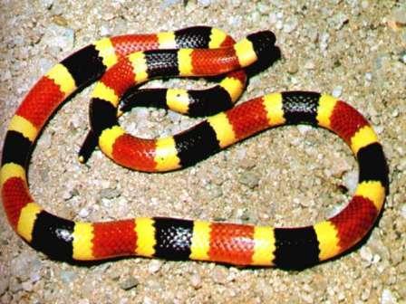 Snake-Photos