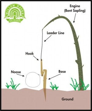 How to Build a Small Game Snare | The Art of Manliness