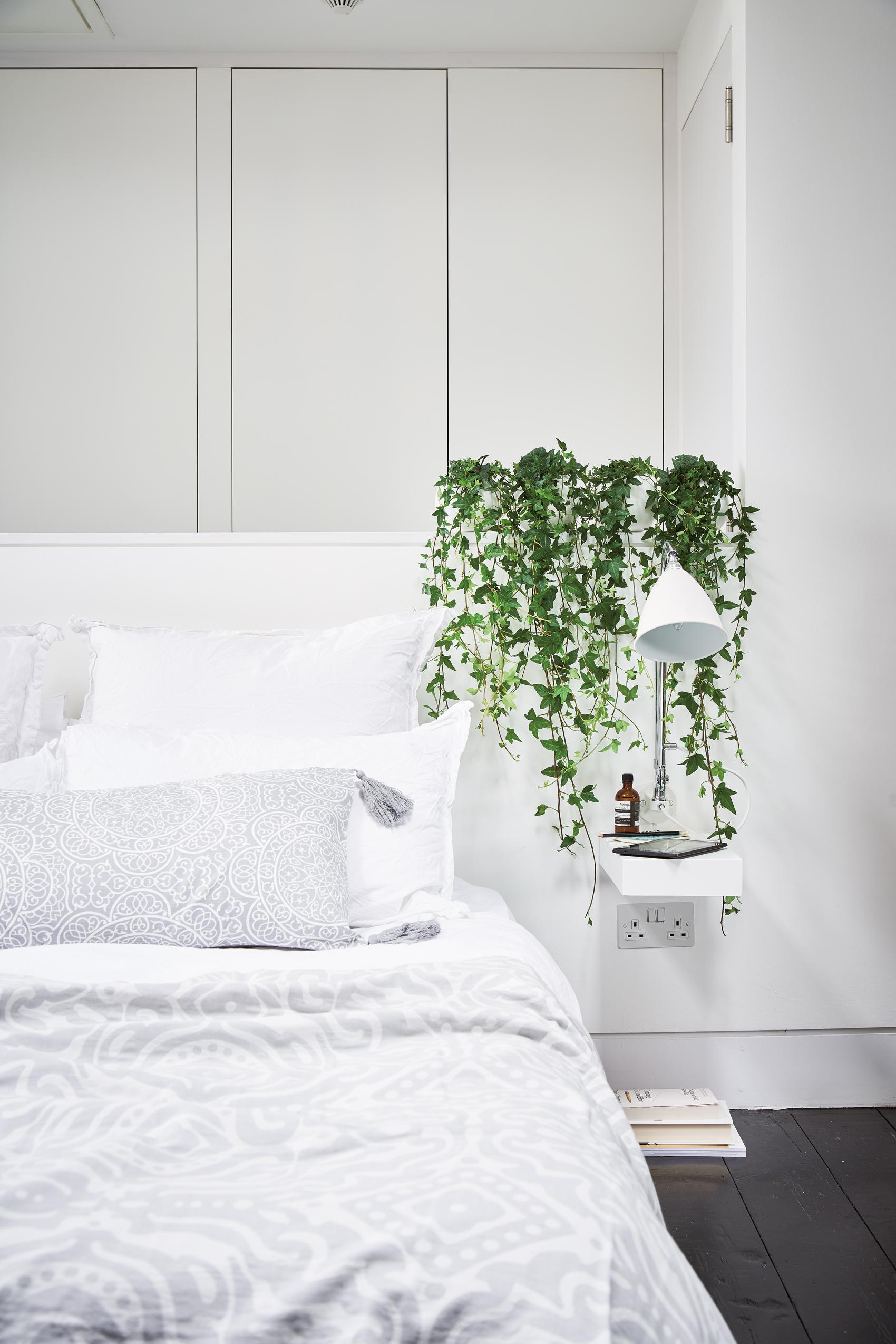 Indoor Hanging Ferns