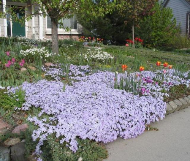 A Yard With Flowers Instead Of Grass