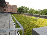 Plant Selection for Extensive Green Roofs in the Research ...
