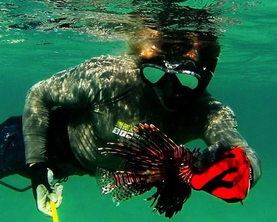 GTM Lionfish