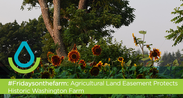 #Fridaysonthefarm: Agricultural Land Easement Protects Historic Washington Farm